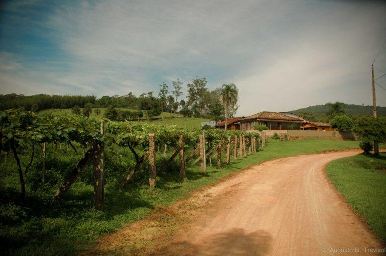 Estrada de acesso à vinícola Trevisol